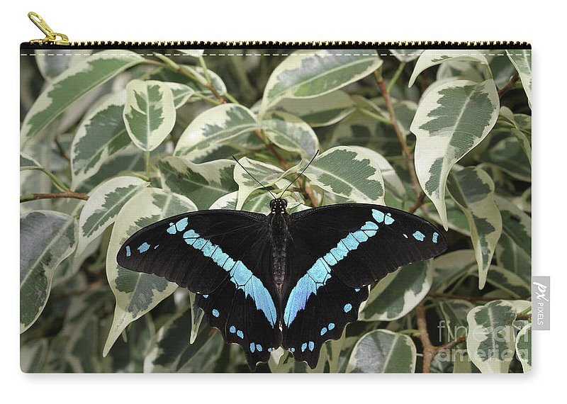 Butterfly Carry-all Pouch featuring the photograph Blue-banded Swallowtail Butterfly by Judy Whitton