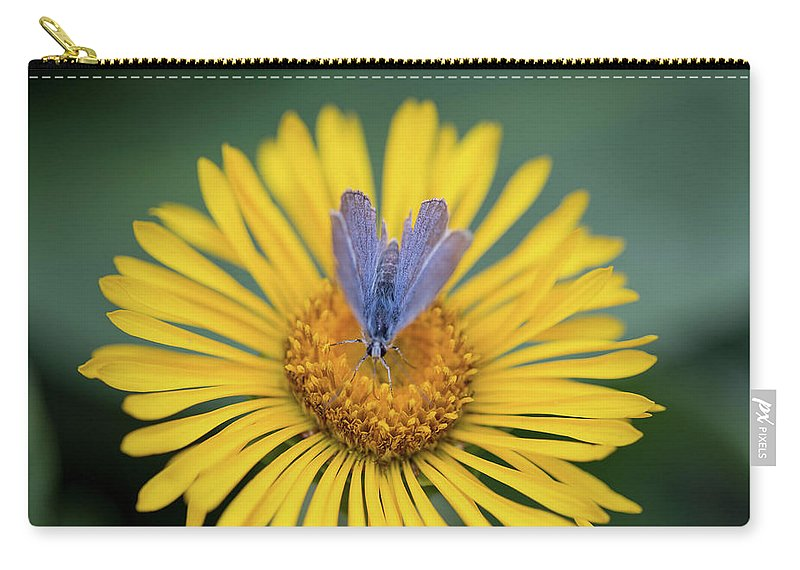 Crested Butte Carry-all Pouch featuring the photograph Blue Butterfly On Alpine Sunflower by Meagan Watson