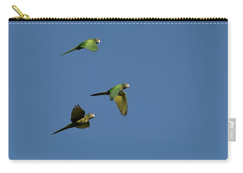 Blue-crowned Parakeet Carry-all Pouch featuring the photograph Blue-crowned Parakeets In Flight by Pablo Rodriguez Merkel