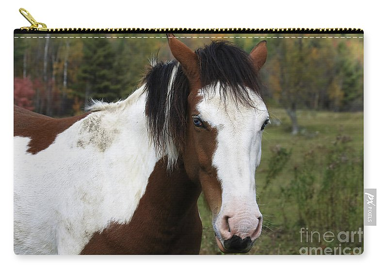 Horse Carry-all Pouch featuring the photograph Blue Eyed Beauty by Deborah Benoit