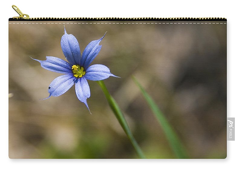 Flower Blue Grass Green Small Little Bright Color Colorful Yellow Flora Nature Carry-all Pouch featuring the photograph Blue-eyed Grass II by Andrei Shliakhau