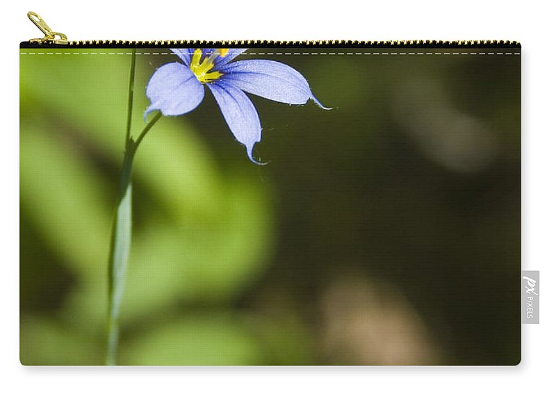 Blue Eye Grass Flower Nature Yellow Green Delicate Small Little Carry-all Pouch featuring the photograph Blue-eyed Grass IIi by Andrei Shliakhau