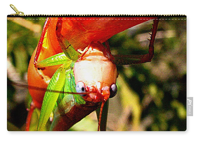 Grasshopper Carry-all Pouch featuring the photograph Blue Eyed Grasshopper 2 by J M Farris Photography