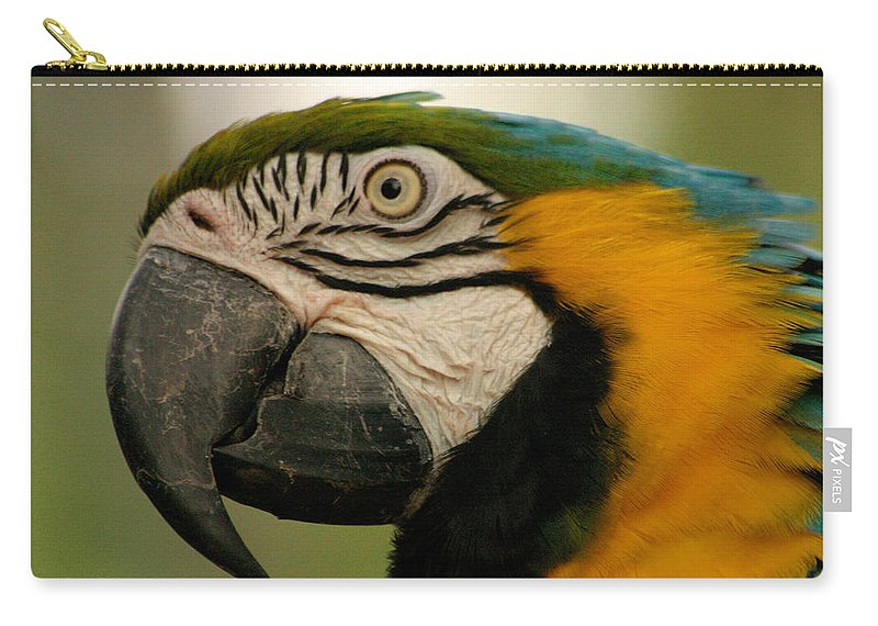 Parrot Carry-all Pouch featuring the photograph Blue Gold Macaw South America by Ralph A Ledergerber-Photography