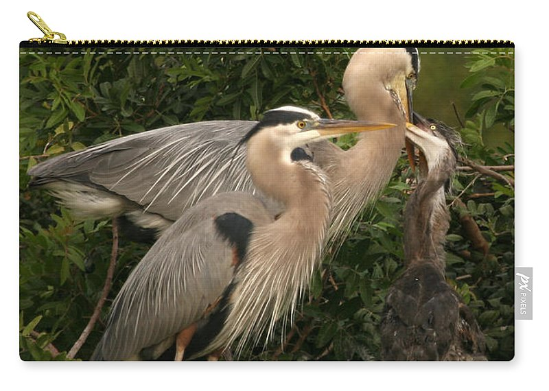 Blue Heron Bird Wildlife Family Gray Grey Shore Florida Rookery Feeding Baby Carry-all Pouch featuring the photograph Blue Heron Family by Shari Jardina