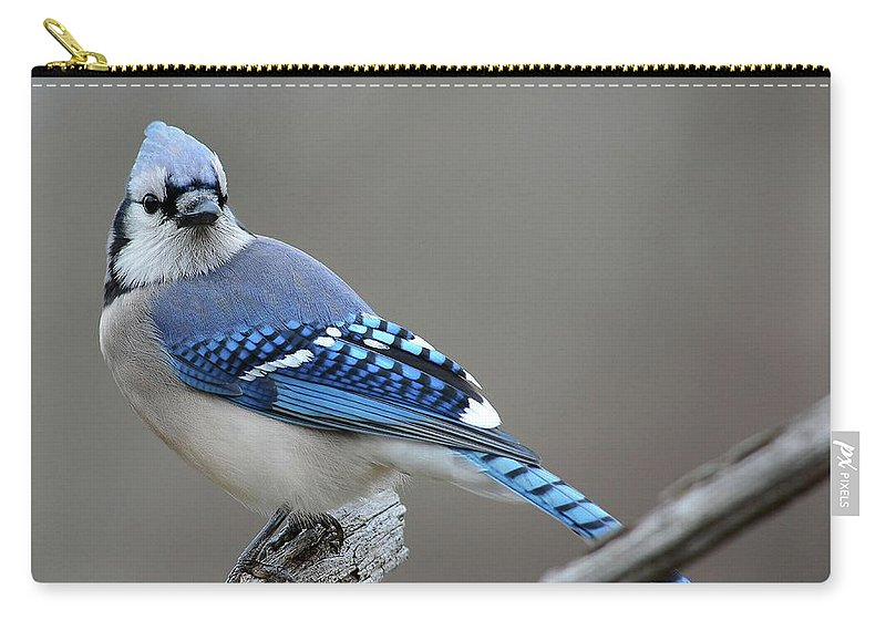 Blue Jay Carry-all Pouch featuring the photograph Blue Jay 2 by Todd Hostetter