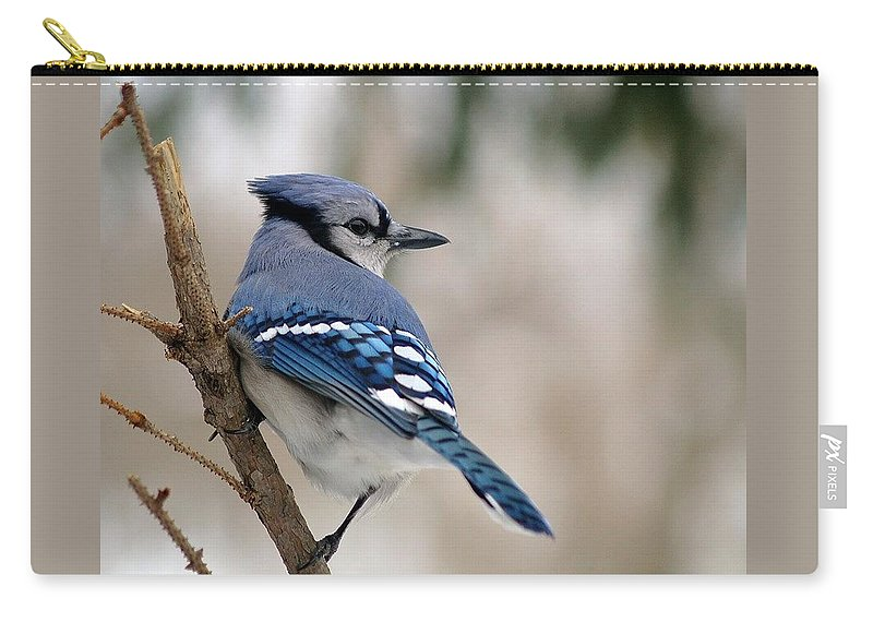 Blue Jay Carry-all Pouch featuring the photograph Blue Jay by Gaby Swanson