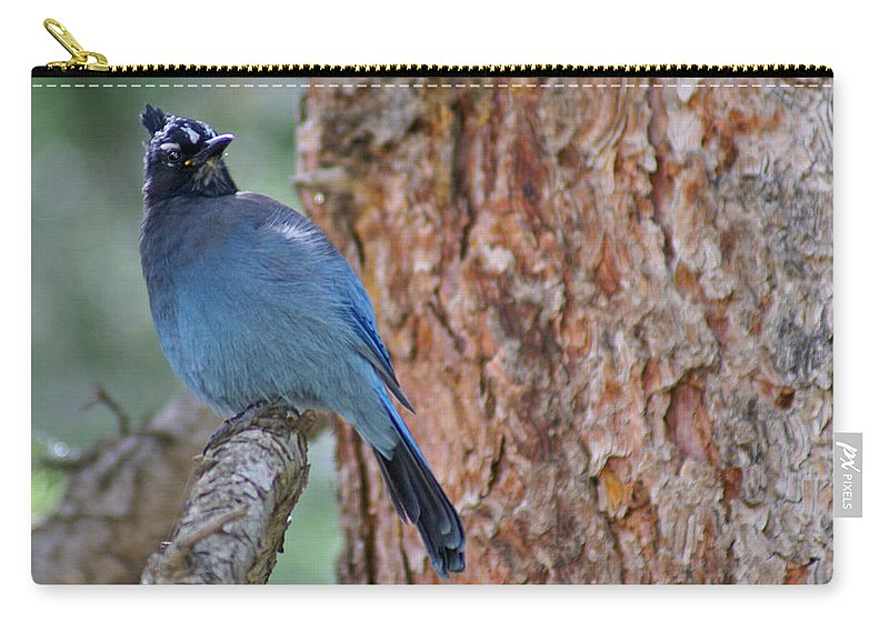 Blue Jay Carry-all Pouch featuring the photograph Blue Jay by Heather Coen