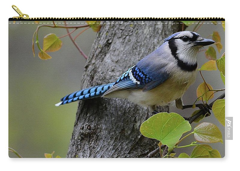 Blue Jay Carry-all Pouch featuring the photograph Blue Jay In Red Bud by Todd Hostetter