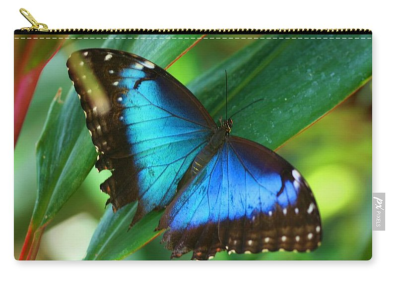 Butterfly Carry-all Pouch featuring the photograph Blue Morpho Butterfly by Kristina Jones
