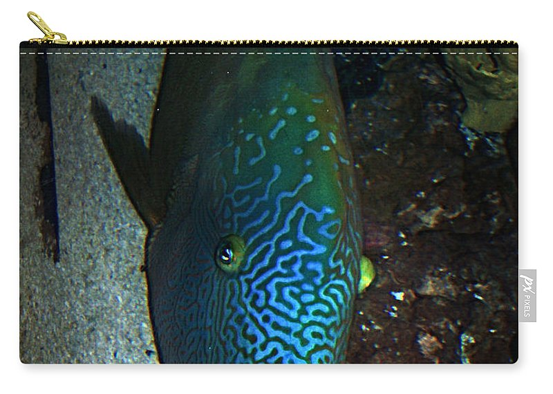 Fish Carry-all Pouch featuring the photograph Blue Parrot Fish by Anthony Jones