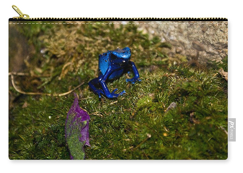 Blue Carry-all Pouch featuring the photograph Blue Poison Arrow Frog by Douglas Barnett
