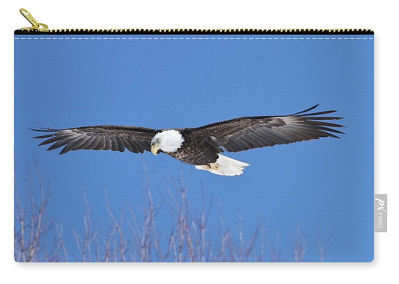 Bald Eagle Carry-all Pouch featuring the photograph Blue Sky Glide by Teresa McGill