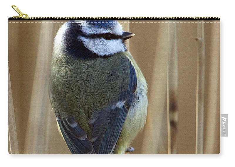 Blue Tit Carry-all Pouch featuring the photograph Blue Tit On Reed by Bob Kemp