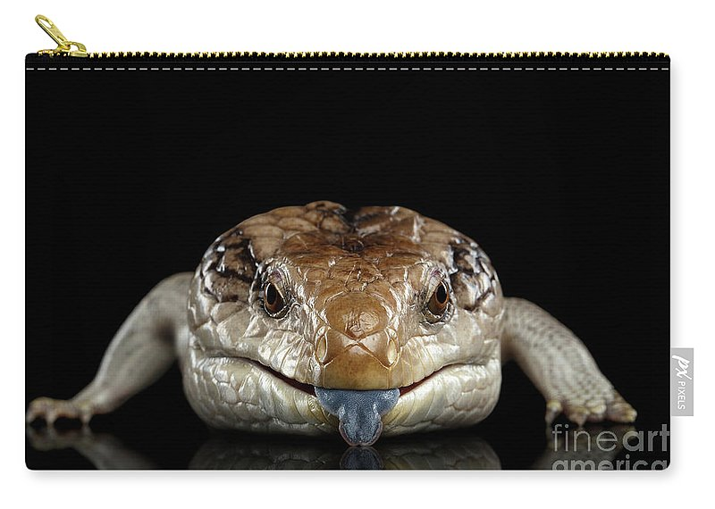 Lizard Carry-all Pouch featuring the photograph Blue-tongued Skink by Sergey Taran
