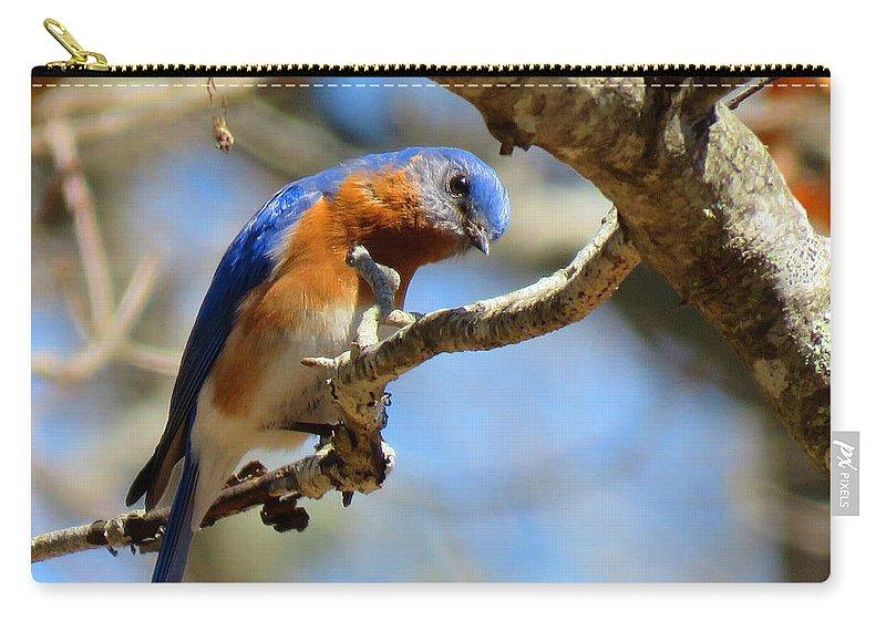 Bluebird Carry-all Pouch featuring the photograph Bluebird Curiousity by Dianne Cowen
