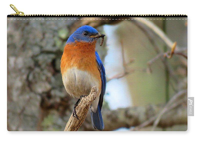 Bluebird Carry-all Pouch featuring the photograph Bluebird Dad by Dianne Cowen