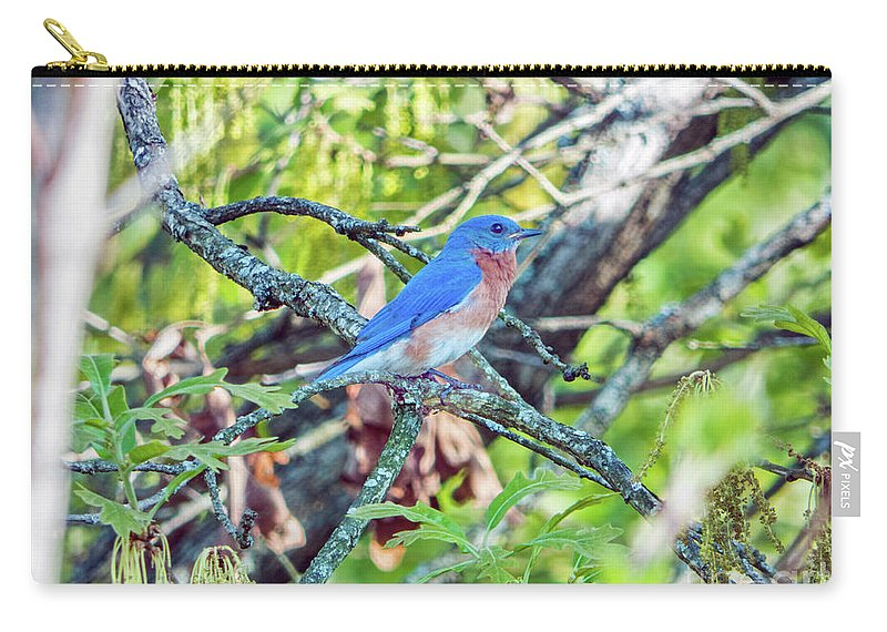 Bluebird Carry-all Pouch featuring the photograph Bluebird by Dragonfleyes Photography and Creations
