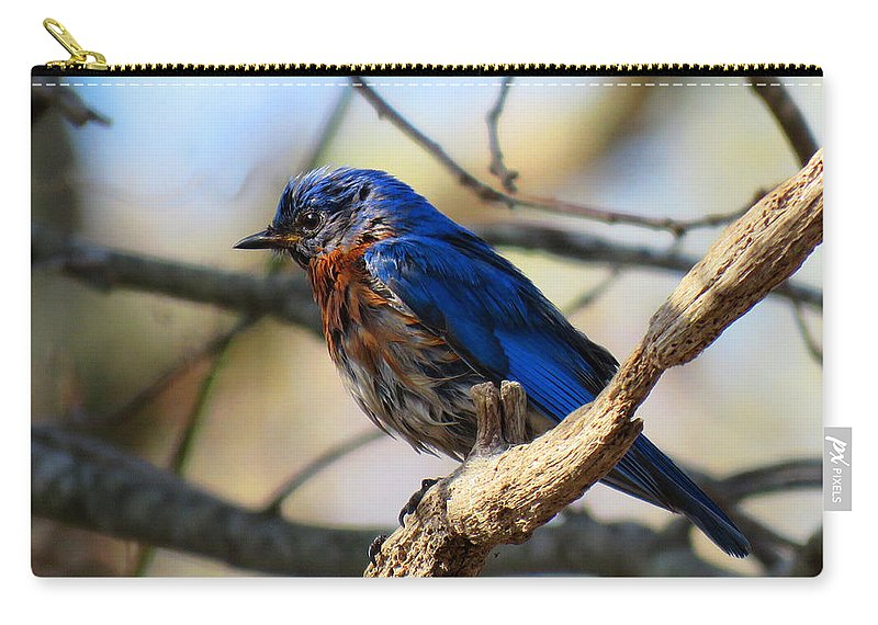 Bluebird Carry-all Pouch featuring the photograph Bluebird In May by Dianne Cowen
