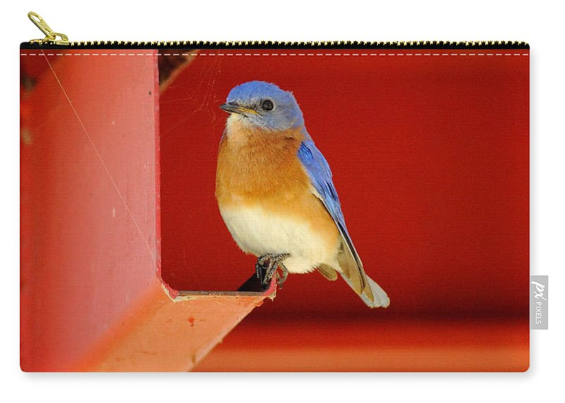 Nature Carry-all Pouch featuring the photograph Bluebird On Red by Robert Frederick