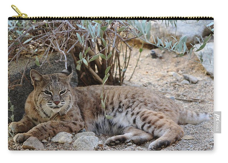 Bobcat Carry-all Pouch featuring the photograph Bobcat Resting by Colleen Cornelius