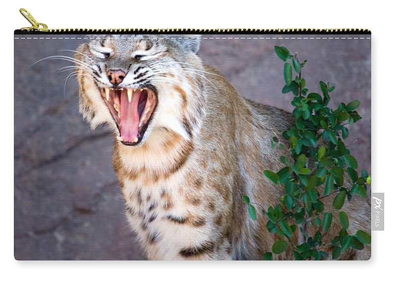 Animal Carry-all Pouch featuring the photograph Bobcat Yawn by Randall Ingalls