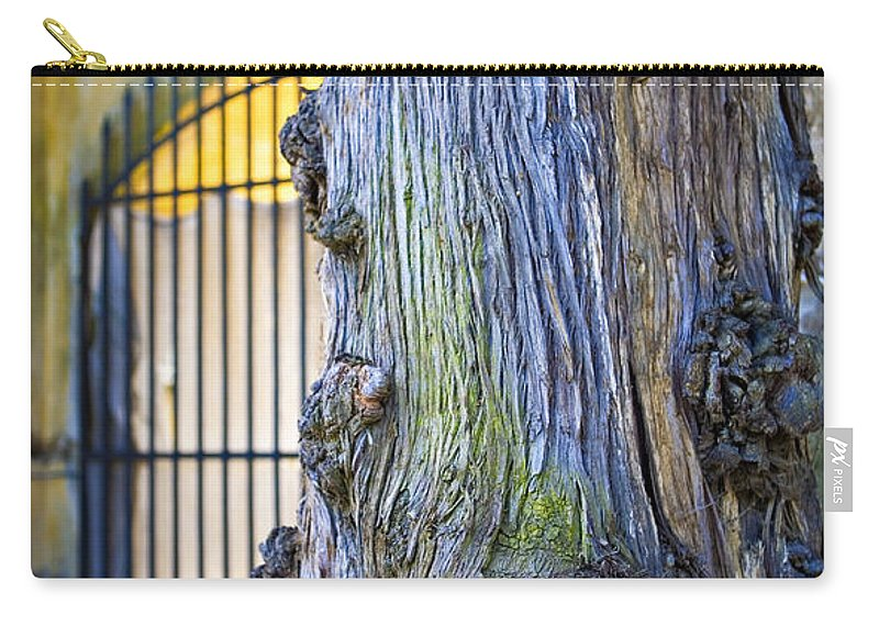 Boboli Carry-all Pouch featuring the photograph Boboli Garden Ancient Tree by Marilyn Hunt