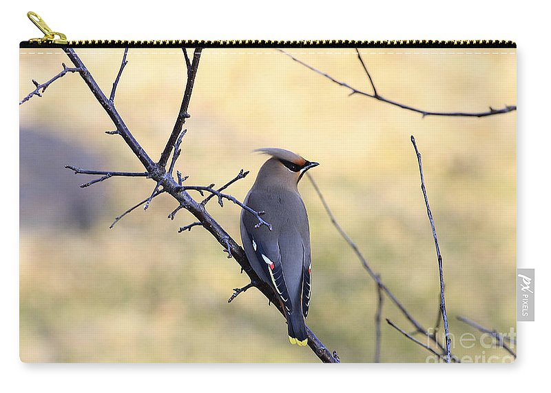 Waxwing Carry-all Pouch featuring the photograph Bohemian Cedar Waxwing In Spring by Deborah Benoit