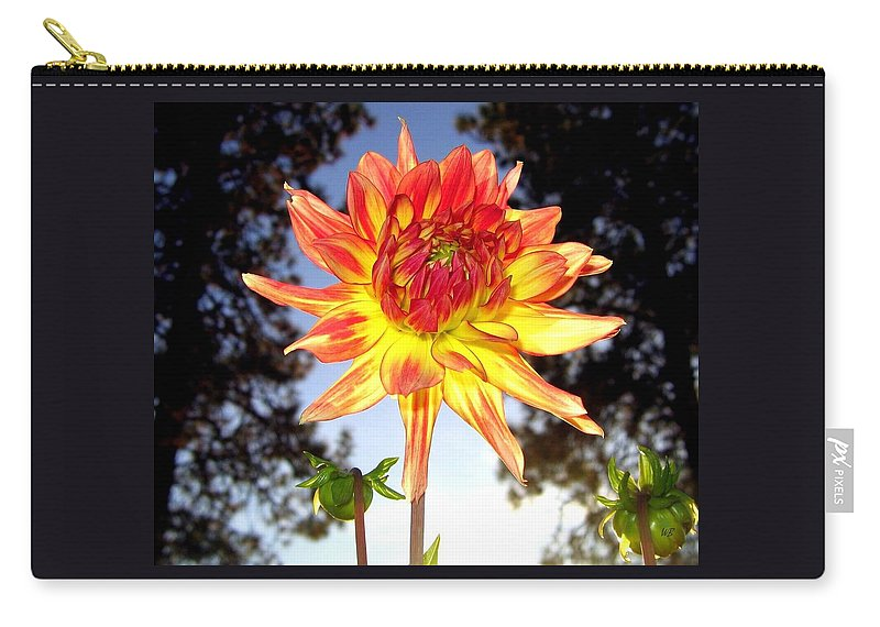 Dahlia Carry-all Pouch featuring the photograph Bold And Beautiful by Will Borden