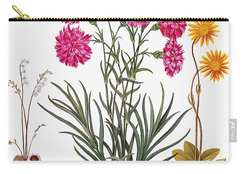 1613 Carry-all Pouch featuring the photograph Botany: Flowers, 1613 by Granger