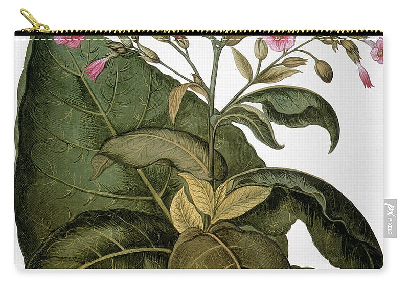 1613 Carry-all Pouch featuring the photograph Botany: Tobacco Plant by Granger