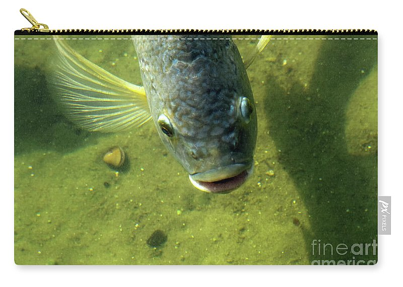 Fish Carry-all Pouch featuring the photograph Botox by William Tasker