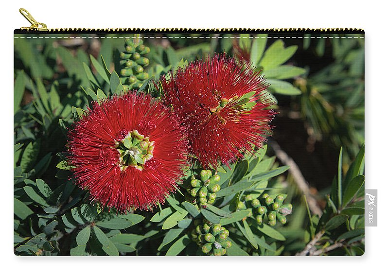 Plant Carry-all Pouch featuring the photograph Bottle Brush by Dennis Reagan