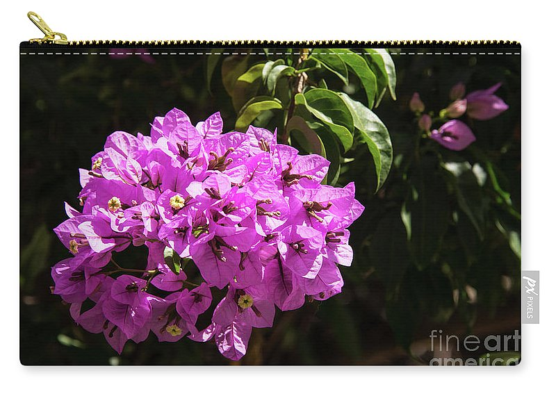 Burgazada Island Carry-all Pouch featuring the photograph Bougainvillea Bloom by Bob Phillips