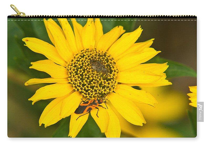 Box Carry-all Pouch featuring the photograph Box Elder Bug On False Sunflower by Douglas Barnett