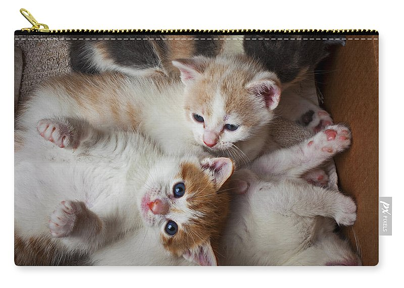 Kitten Carry-all Pouch featuring the photograph Box Full Of Kittens by Garry Gay