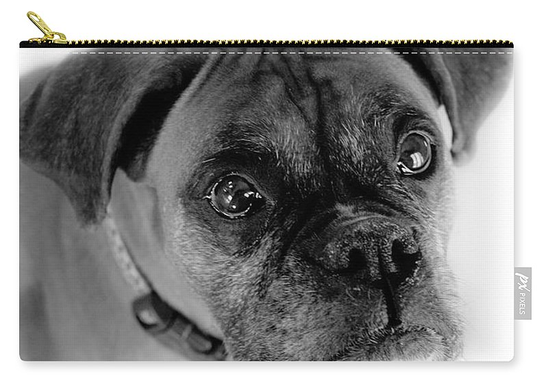 Boxer Carry-all Pouch featuring the photograph Boxer Dog by Marilyn Hunt