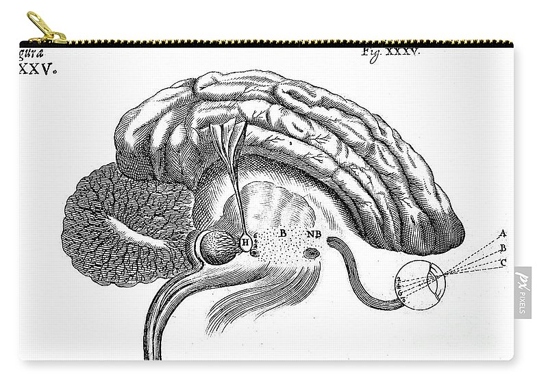 Historic Carry-all Pouch featuring the photograph Brain And Eye, Descartes, Illustration by Wellcome Images