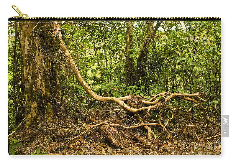 Tree Carry-all Pouch featuring the photograph Branching Out In Costa Rica by Madeline Ellis