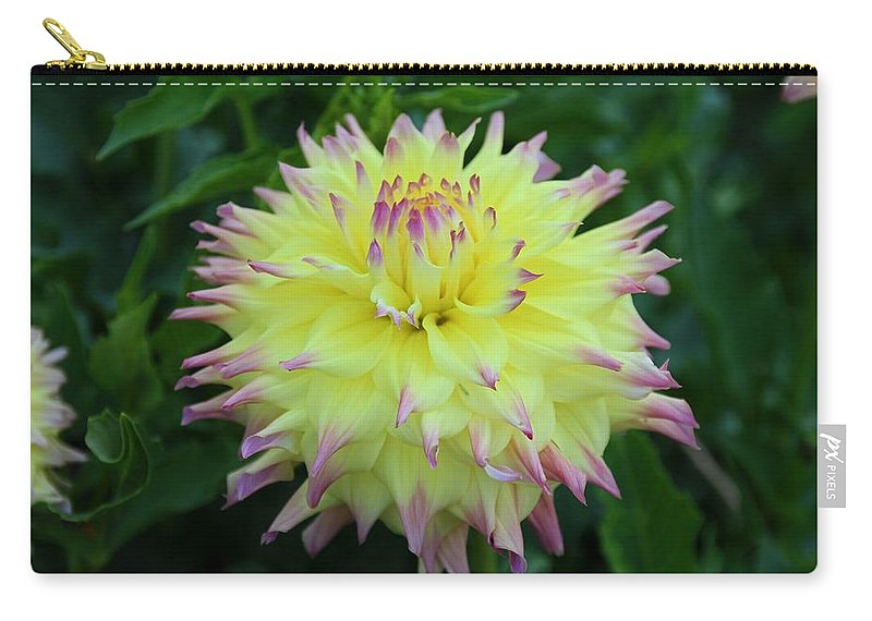 Dahlia Carry-all Pouch featuring the photograph Brave And Crazy by Michiale Schneider