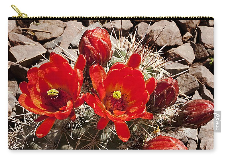Blossoms Carry-all Pouch featuring the photograph Bright Orange Cactus Blossoms by Phyllis Denton