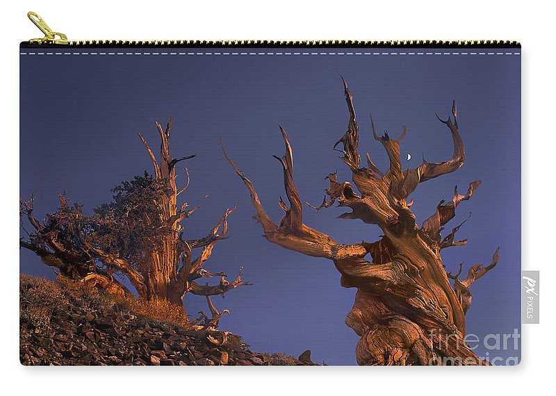 Bristlecone Pine Carry-all Pouch featuring the photograph Bristlecone Pines At Sunset With A Rising Moon by Dave Welling