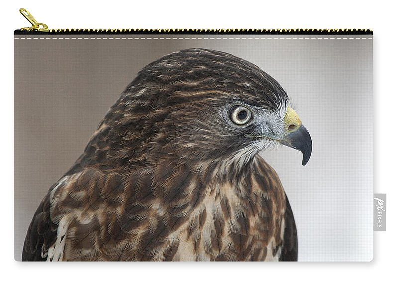 Hawk Carry-all Pouch featuring the photograph Broad-winged Hawk by Emma England