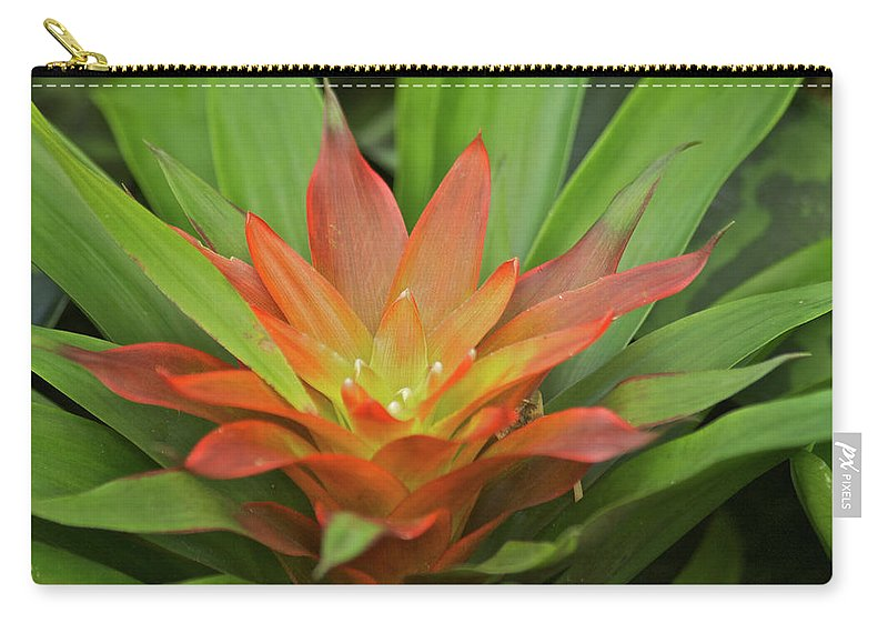 Bromeliad Carry-all Pouch featuring the photograph Bromeliad by Michael Peychich