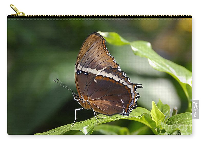Butterfly Carry-all Pouch featuring the photograph Brown Beauty by David Lee Thompson