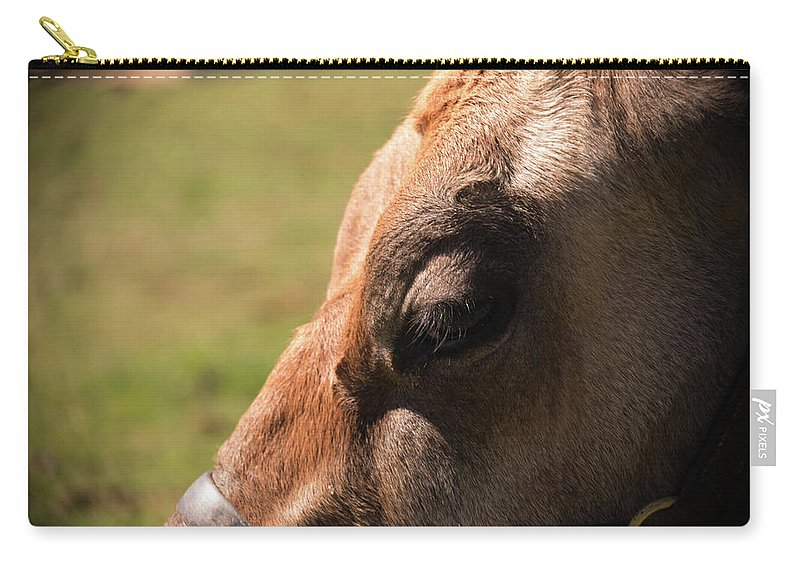 Cow Carry-all Pouch featuring the photograph Brown Cow With Vignette by Diane Schuler