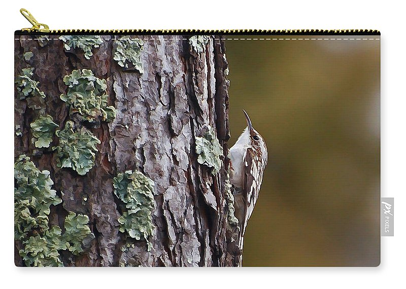 Brown Creeper Carry-all Pouch featuring the photograph Brown Creeper by Kerri Farley