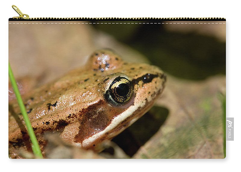 Amphibian Carry-all Pouch featuring the photograph Brown Frog In The Forest - Western Oregon by Randall Ingalls
