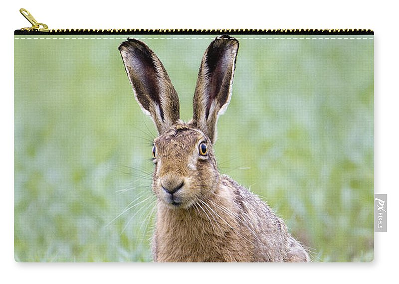 Brown Hare Carry-all Pouch featuring the photograph Brown Hare by Bob Kemp