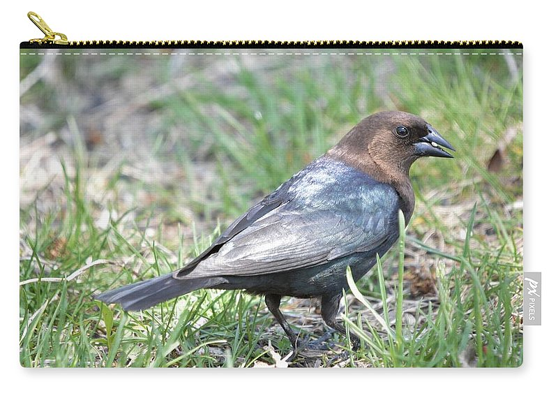 Animal Carry-all Pouch featuring the photograph Brown-headed Cowbird 2 by Bonfire Photography